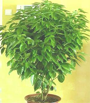 已有[ ]人购买 编号:        6 花材:        常绿树种,大气
