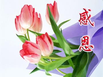 2013年白色情人节_感恩节送什么花好,送花秘籍,鲜花礼品- 思可鲜花网