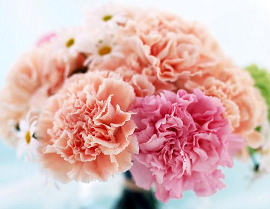 2013年白色情人节_母亲节送花讲究多,送花秘籍,鲜花礼品- 思可鲜花网